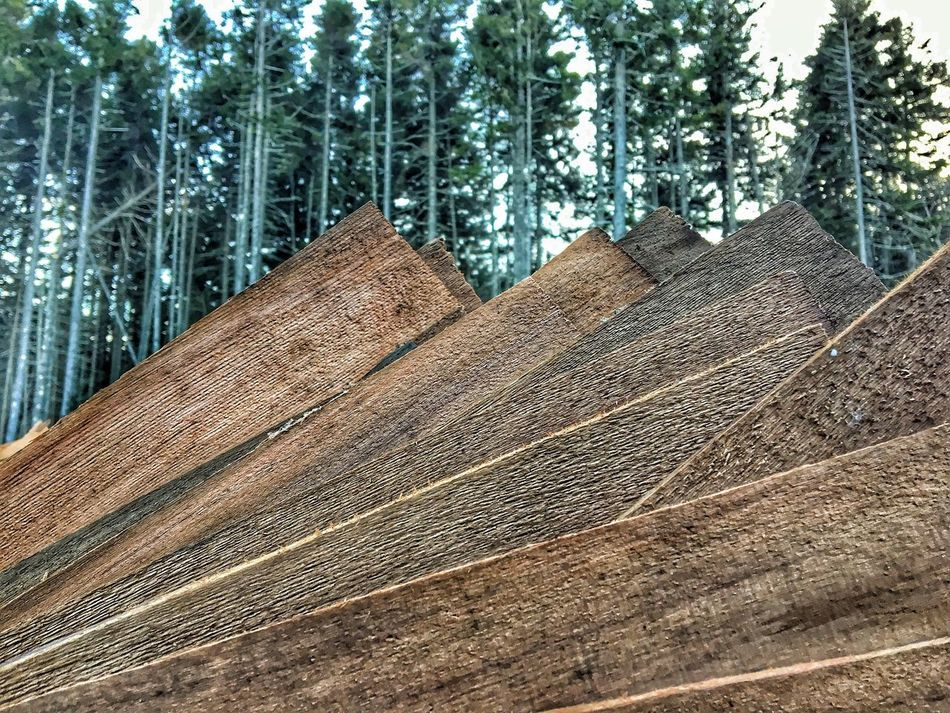 Outdoors Day Tree Forest Nature No People Wood - Material Used Shingles Still Life Close-up Beauty In Nature