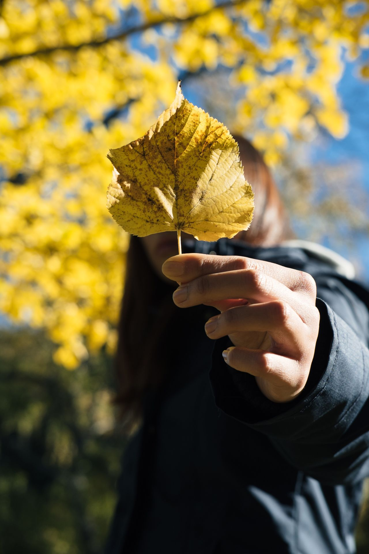 Autumn Human Hand Leaf One Person Change Holding Outdoors Human Body Part Yellow Real People Day Close-up Nature Tree Adult People FUJIFILM X-T1