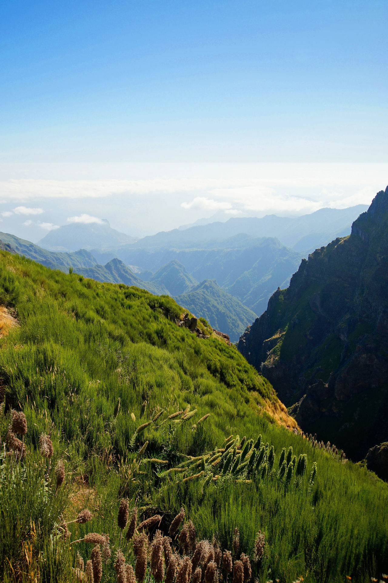 O the mountains of Madeira Island Beauty In Nature Grass Green Color Hiking Landscape Mountain Mountain Range Nature No People Outdoors Panorama Panoramic Landscape Plant Scenics Sky Sky And Clouds Soltitude Tranquil Scene Tranquility