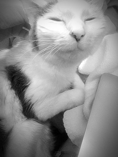 My happy girl ! Smile Cute Pets Spoiled Rotten Yes, Another LiliBug Pic Lilibug Cute Cats Bnw Pets Pet Photography  Cats Just To Make You Smile