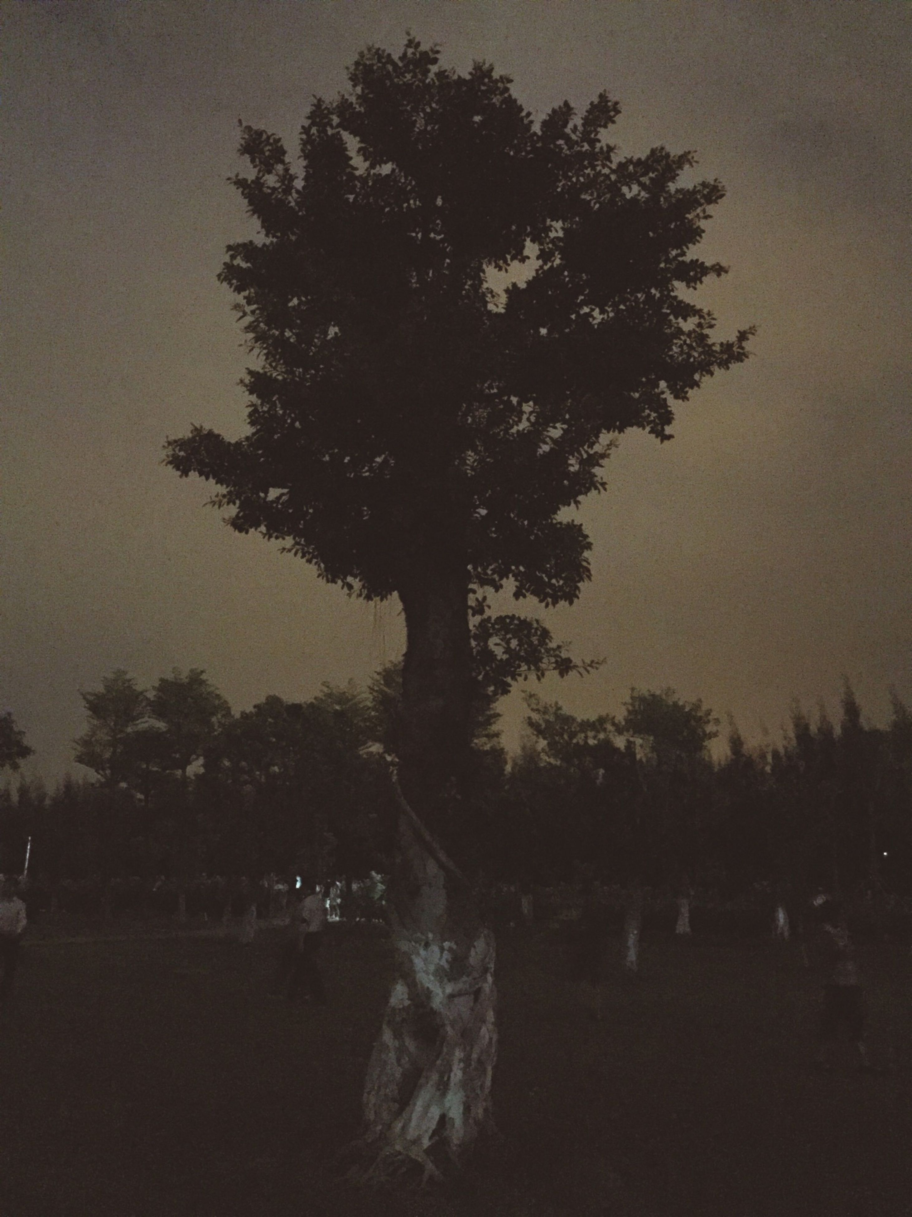 tree, silhouette, tranquility, tranquil scene, sky, nature, growth, scenics, beauty in nature, tree trunk, landscape, branch, sunset, dusk, outdoors, idyllic, non-urban scene, field, no people, park - man made space