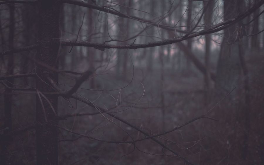 Somber Moody WoodLand EyeEm Selects Fog Tree Nature Bare Tree Forest Branch No People Outdoors Hazy  Beauty In Nature