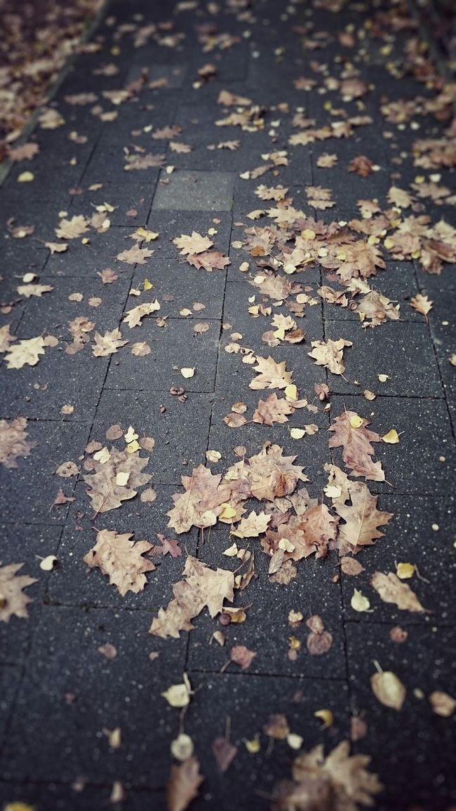 Autumn Autumn Colors Gray Day Sidewalk Hanging Out Mysmartphonelife Simple Photography Silhouette Sony Xperia Z3 Enjoying Life