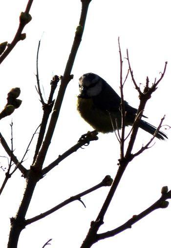 Birds Nature_perfection Macro