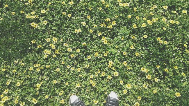 The EyeEm Facebook Cover Challenge Converses Feetselfie Flowers