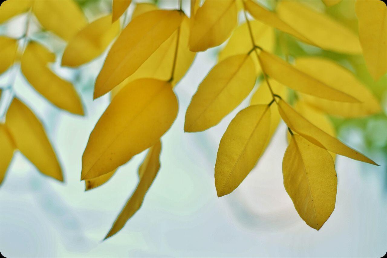 Hwrbst Heikobo Herbstfarben Herbst Herbststimmung