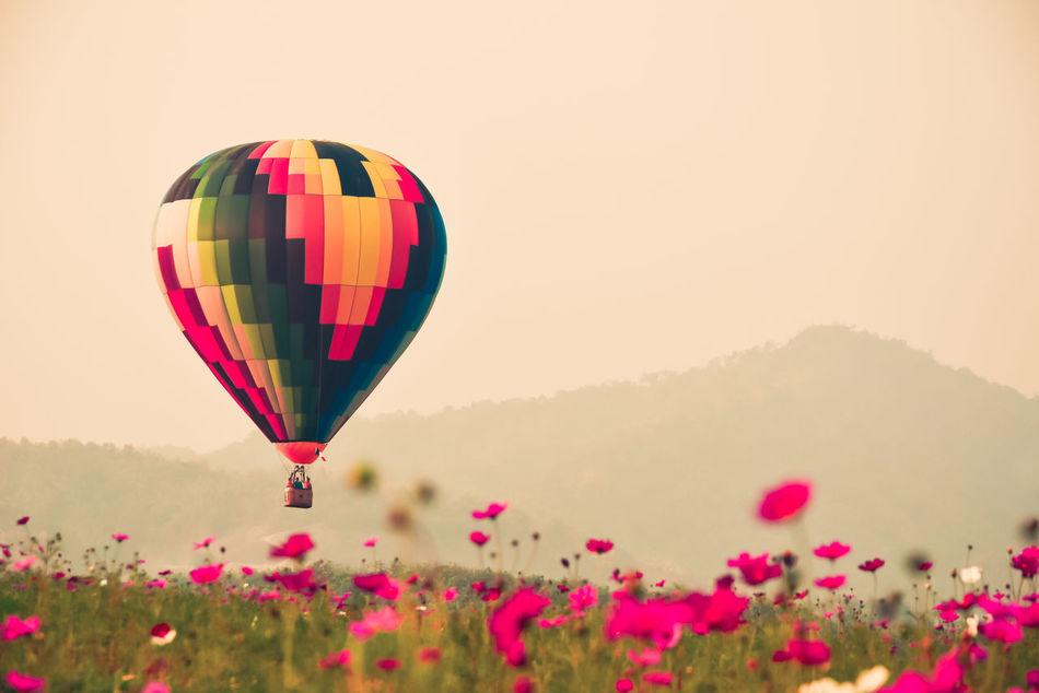 Beautiful stock photos of blumen, Beauty In Nature, Blooming, Chiang Rai, Clear Sky