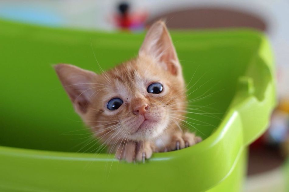 Beautiful stock photos of baby animals, Animal Head, Animal Themes, Basket, Container