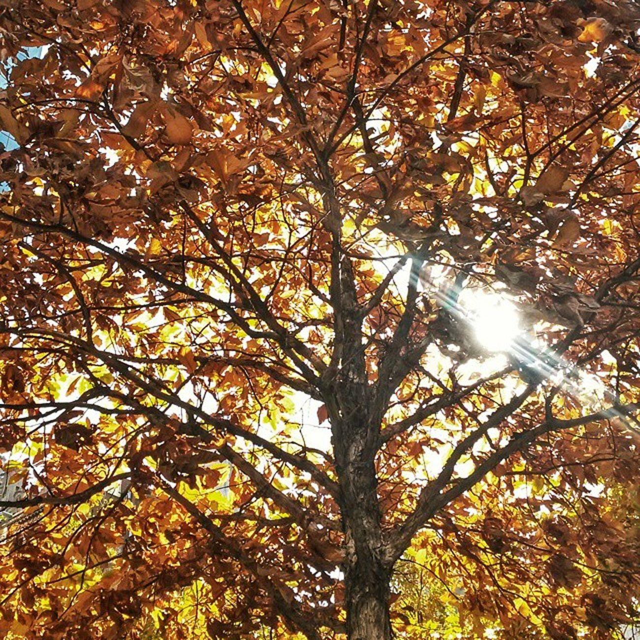 E o outono vem chegando de mansinho. É tempo de renovação! Eutonanuvem Outono Carioquissimo Jornaloglobo vejario rioeuteamo rioguiaoficial errejota riooutdoor riodejaneiroinstagram arvore nature natureza