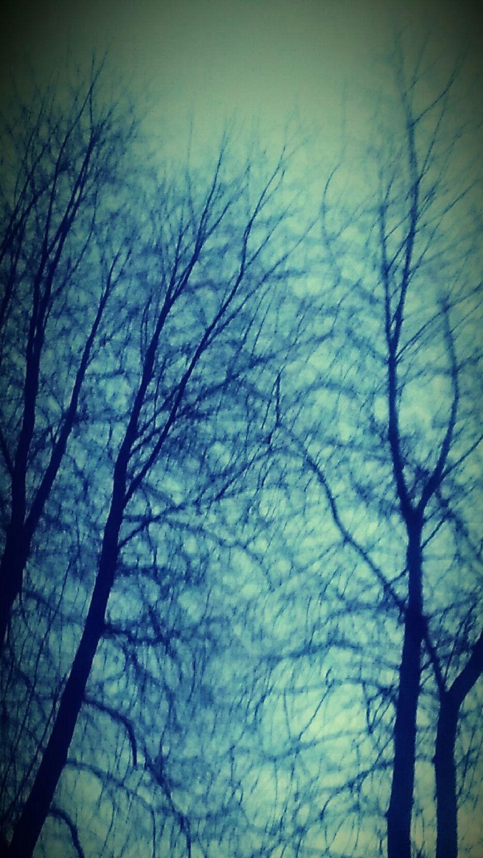 Natures Textures Dream Catchers Treesilhouette Trees Dreamcatchers Trees Dream Catchers Nature's Dreamcatcher