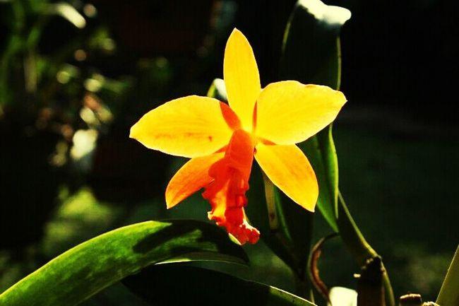 Flowers Nature Garden Orchids