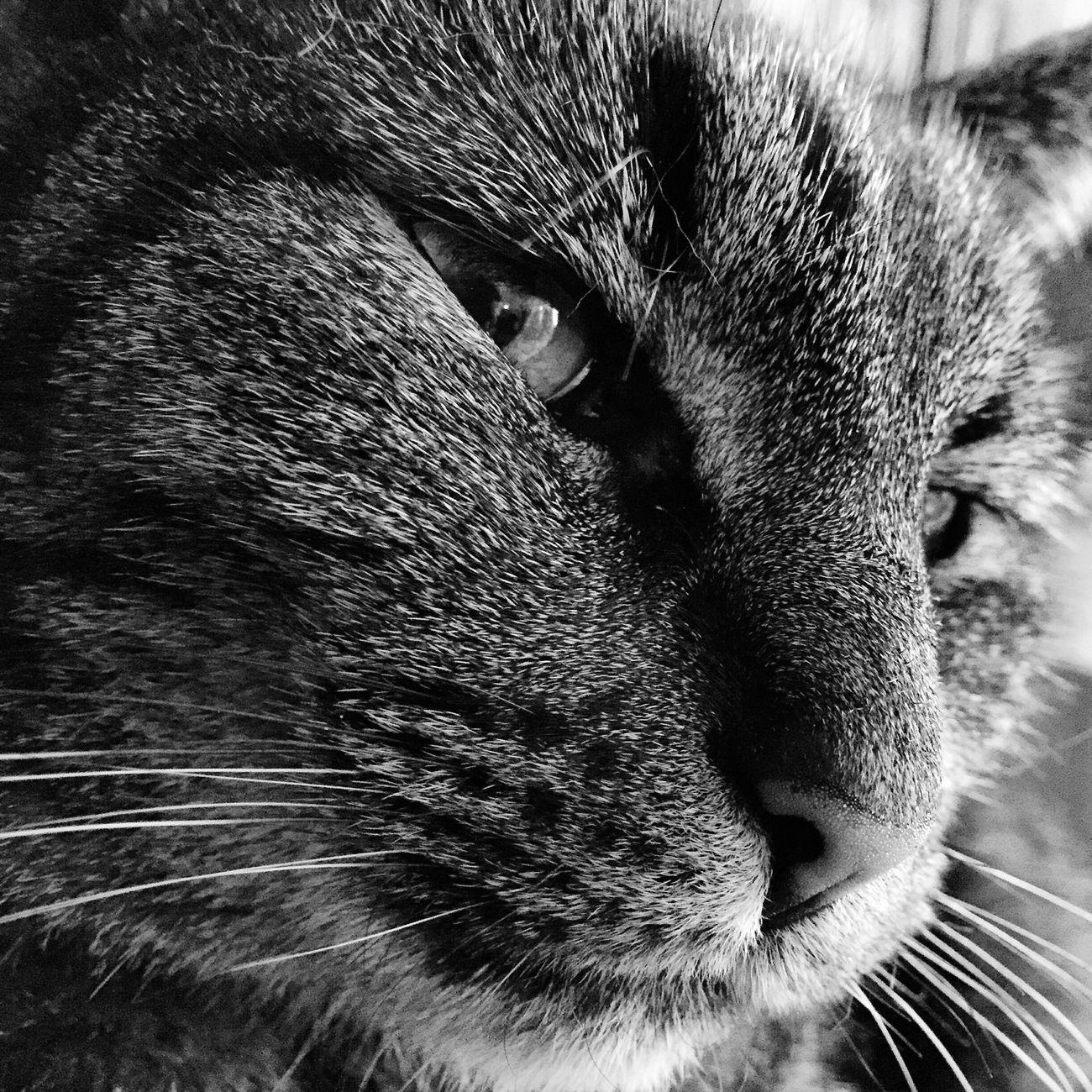 Cat EyeEmBestPics EyeEm Gallery Eye4delight The Week Of Eyeem Bw_collection EyeEm Best Edits Animal Photography Animal_collection Cats Of EyeEm