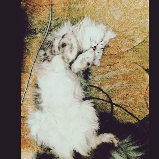Cats Of EyeEm Cat♡ Spontaniouscaptures My Babe <3 Sleeping Cat