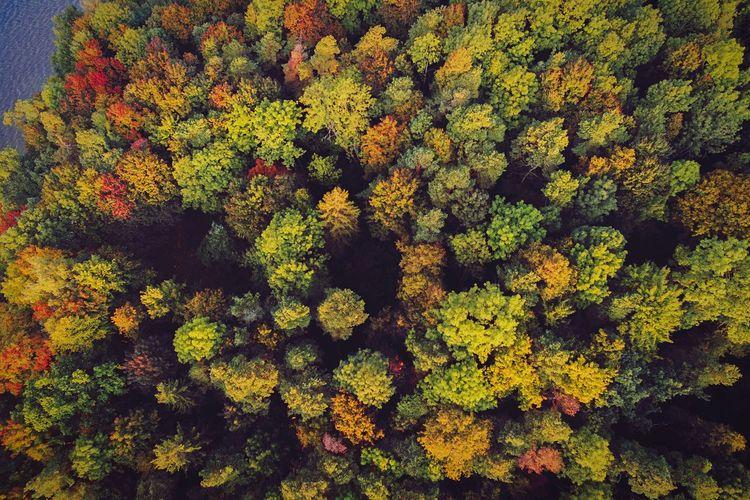 A Bird's Eye View of Autumn Colors | Dronephotography Beauty In Nature Autumn 2016 Landscape Wide Angle Trees Tree Colors Lietuva Pazaislis Monestery Forest Autumn Collection Dji Phantom DJI Phantom 3 Advanced Phantom 3 Dji Europe Baltic Countries
