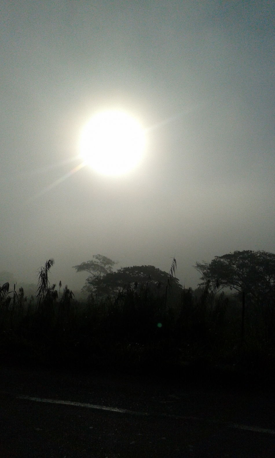 Silhouette Sky Sun Nature Beauty In Nature Outdoors No People Tree Moon Solar Eclipse Neblina