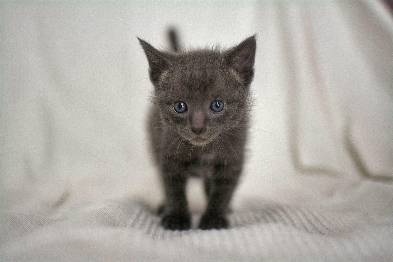 Beautiful stock photos of danke, Animal Themes, Bed, Black Color, Cute