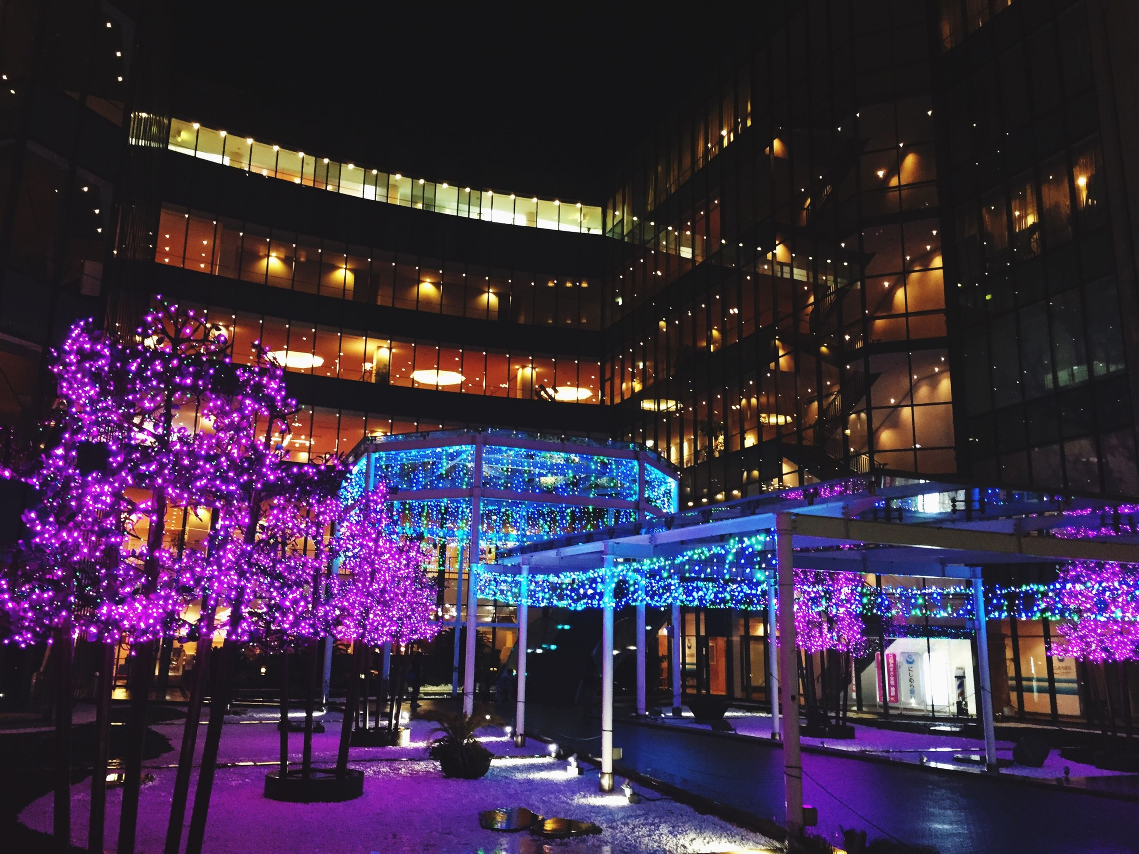 night, building exterior, illuminated, built structure, architecture, flower, city, purple, tree, growth, building, lighting equipment, outdoors, no people, plant, street light, city life, window, nature, pink color