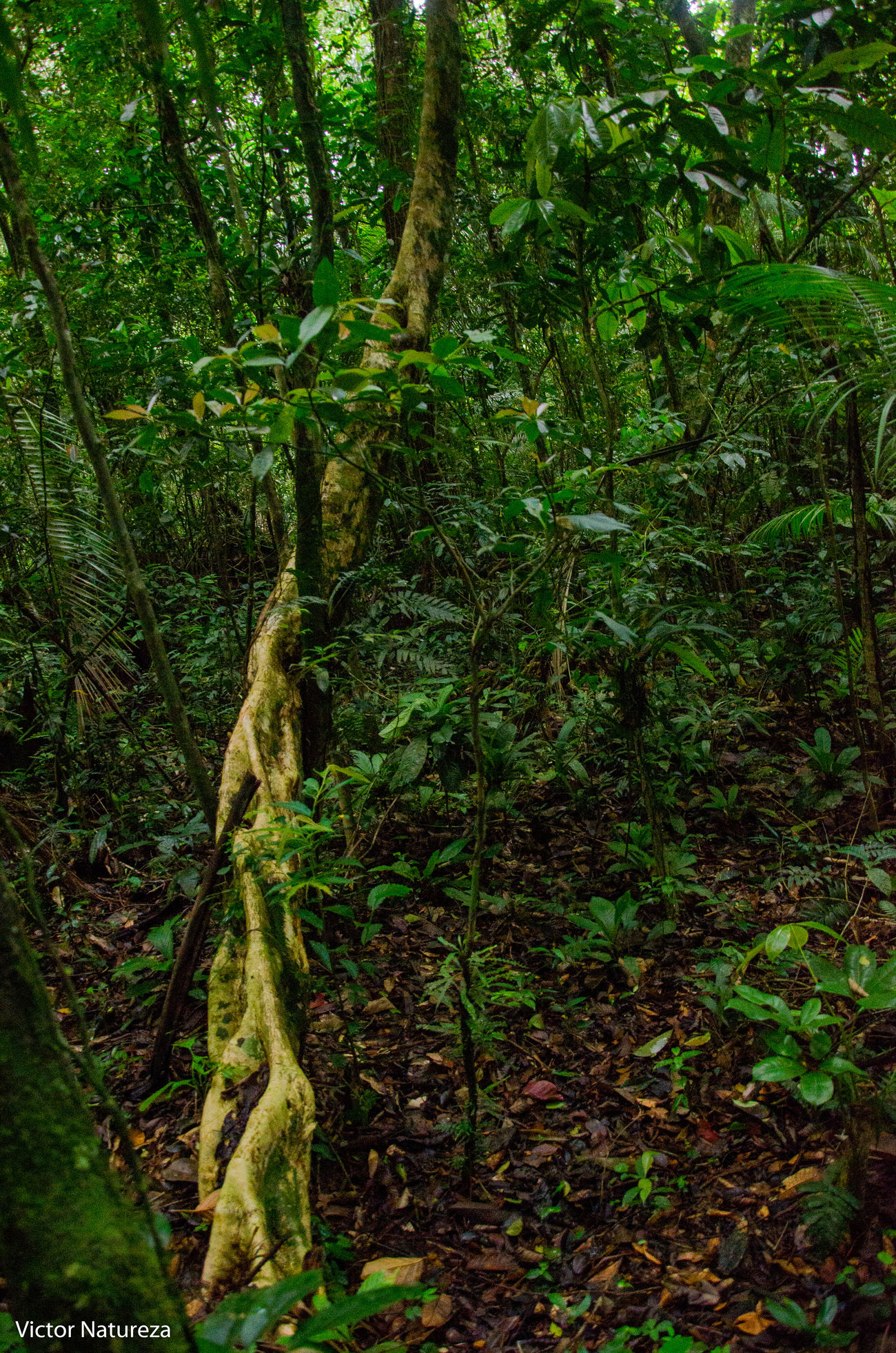 Green Color Tree Nature Documentary Fotodocumental Documentaryphotography Vitaonatureza Victornatureza Artefotografia Fotografiaautoral Brasil Travel Destinations Paraty Textura Brazil Animal Themes Beauty In Nature Green Color Animals In The Wild