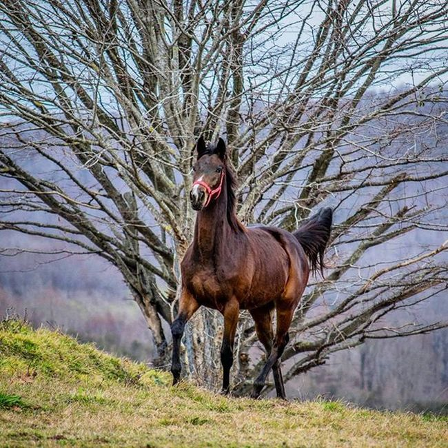 🐎 Horse Racehorse Morning Sunrise Nature Equine HDR Equestrian Runner Stake Equestrianlife Stable Sport Filly Colt Forest Green Cloud Clouds Gopro Landscape Sand Sport Run Sky treetreesworldgrassrunnergirlwonderful