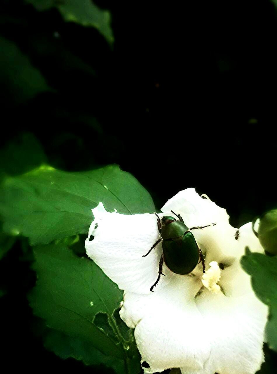 insect, one animal, animal themes, animals in the wild, wildlife, leaf, close-up, animal wildlife, no people, nature, green color, plant, fragility, outdoors, day, housefly, growth, flower, flower head, beauty in nature, freshness