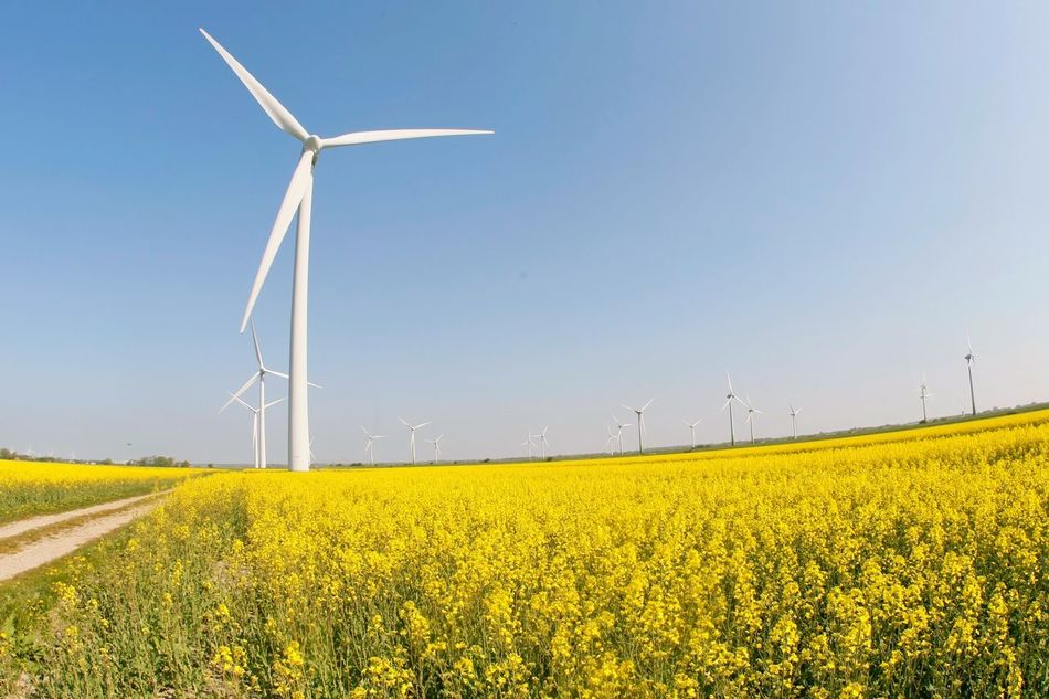 Wind Power Wind Turbine Alternative Energy Fuel And Power Generation Environmental Conservation Renewable Energy Rural Scene Field Windmill Yellow Nature Day Agriculture Outdoors Landscape Industrial Windmill Crop  Scenics Beauty In Nature No People Weltblick