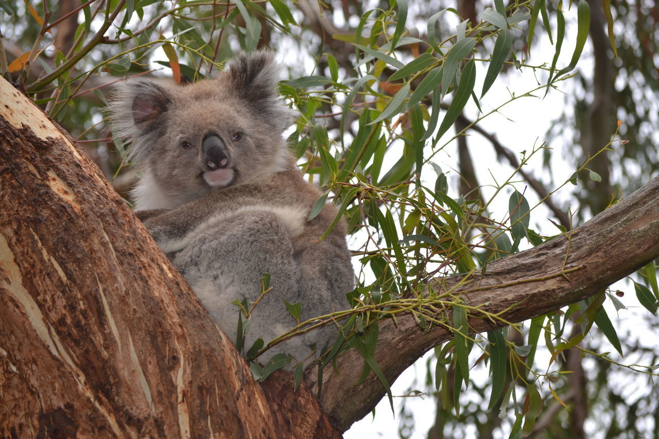 Beautiful stock photos of australia, Animal Themes, Animal Wildlife, Animals In The Wild, Australia