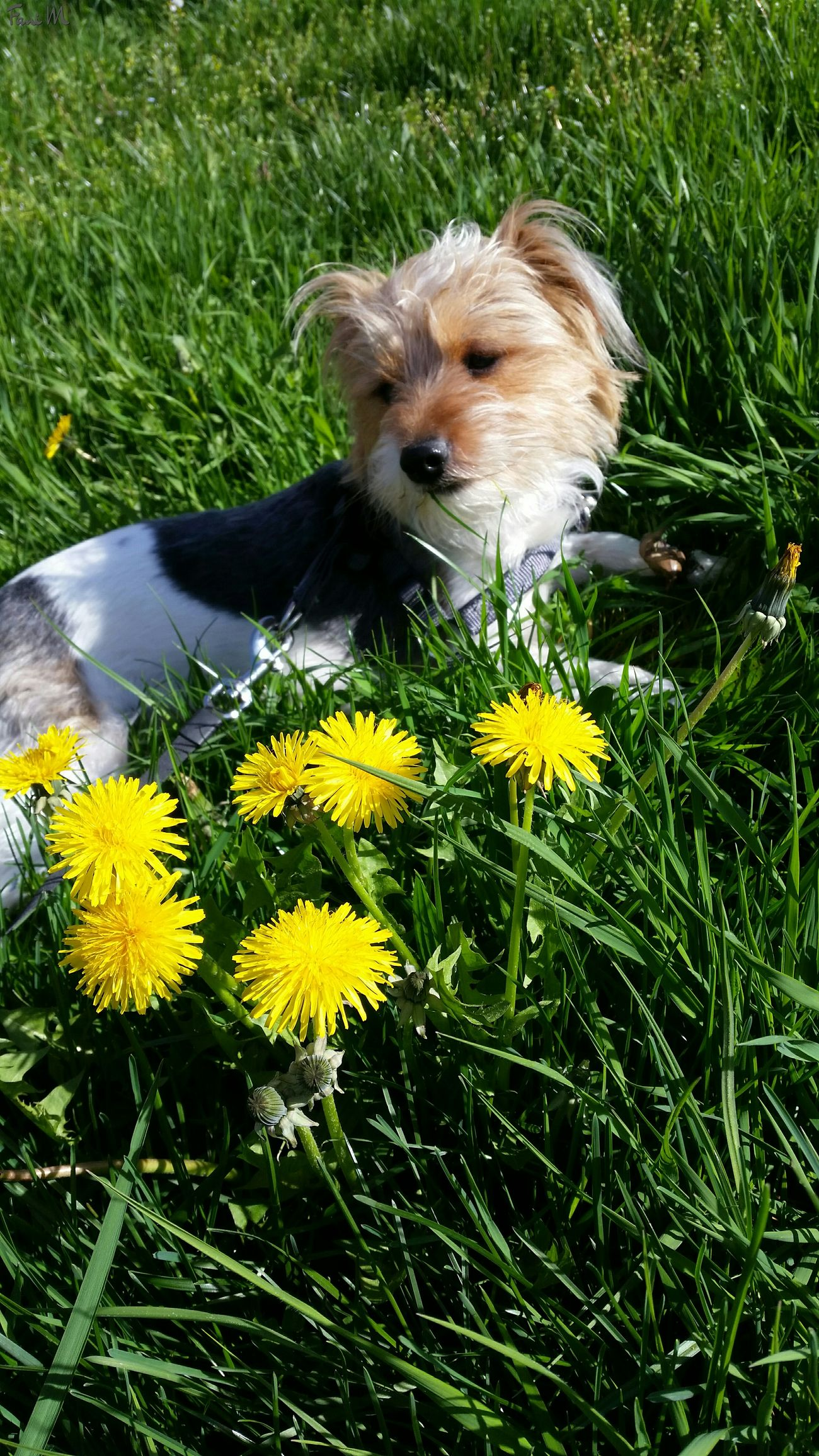 One Animal Animal Themes Flower Outdoors Pets Domestic Animals Loumi Grass Field Beauty In Nature Nature Day Yellow Flower Sunshine Sping Springtime Doggy Dog Dogs Of EyeEm Dog Love Doglover Doggy Love Friend Bestfriend Photography