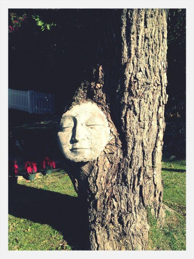 Mr. Tree