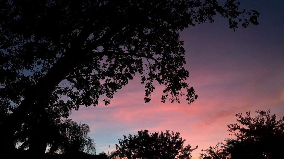 Florida Florida Sunset Florida Life Sunsets Pink Blue Purple Purple Sky Pink And Blue Colorful Sky Colorful Life Outside Nature Tree Palm Trees Black Trees Love Enjoying Life Enjoying Sunset Pretty