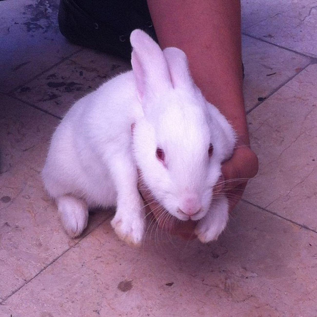 Şirketten Ömer'in Tavşan lari Animal Hayvan Rabbit bunny bun istanbul
