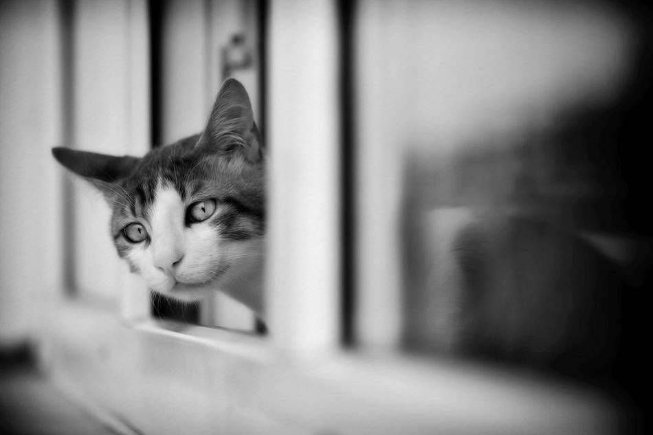 my cat Blackandwhite Cat Hello World Looking Mycat Turkey Window Zuzu ıstanbul