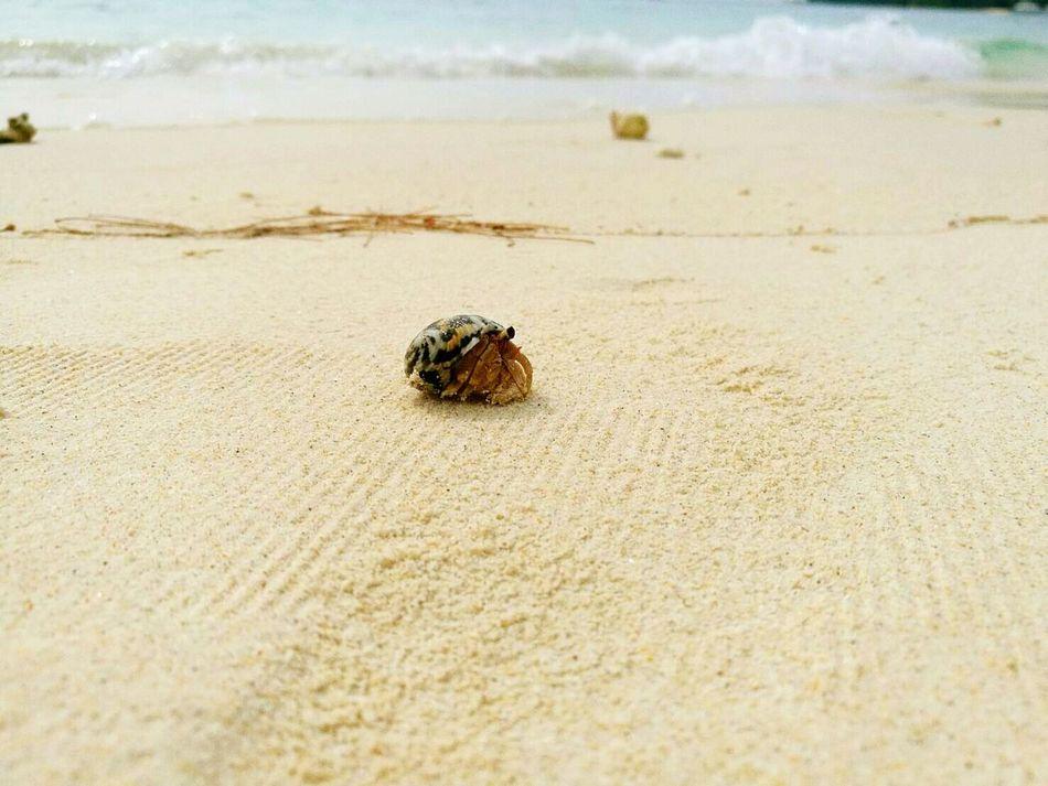 Hermit crab on the beach Hermit Crab EyeEmNewHere Beach Sea Sand Nature Animal Wildlife Beauty In Nature Onthebeach Sand&sea กระบี่ Thailand Unseen Thailand Uniqueness Lieblingsteil