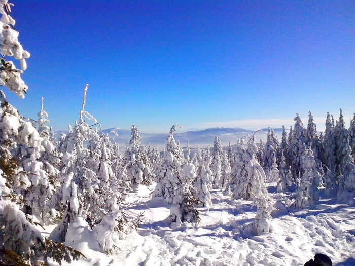 Szczyrk Mountain View Tatry Wintertime Skiing Winter Trees
