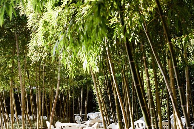Forest Forestwalk Forest Photography White Color Chairs Nature Photography Oedo Botania Minolta Alpha9000
