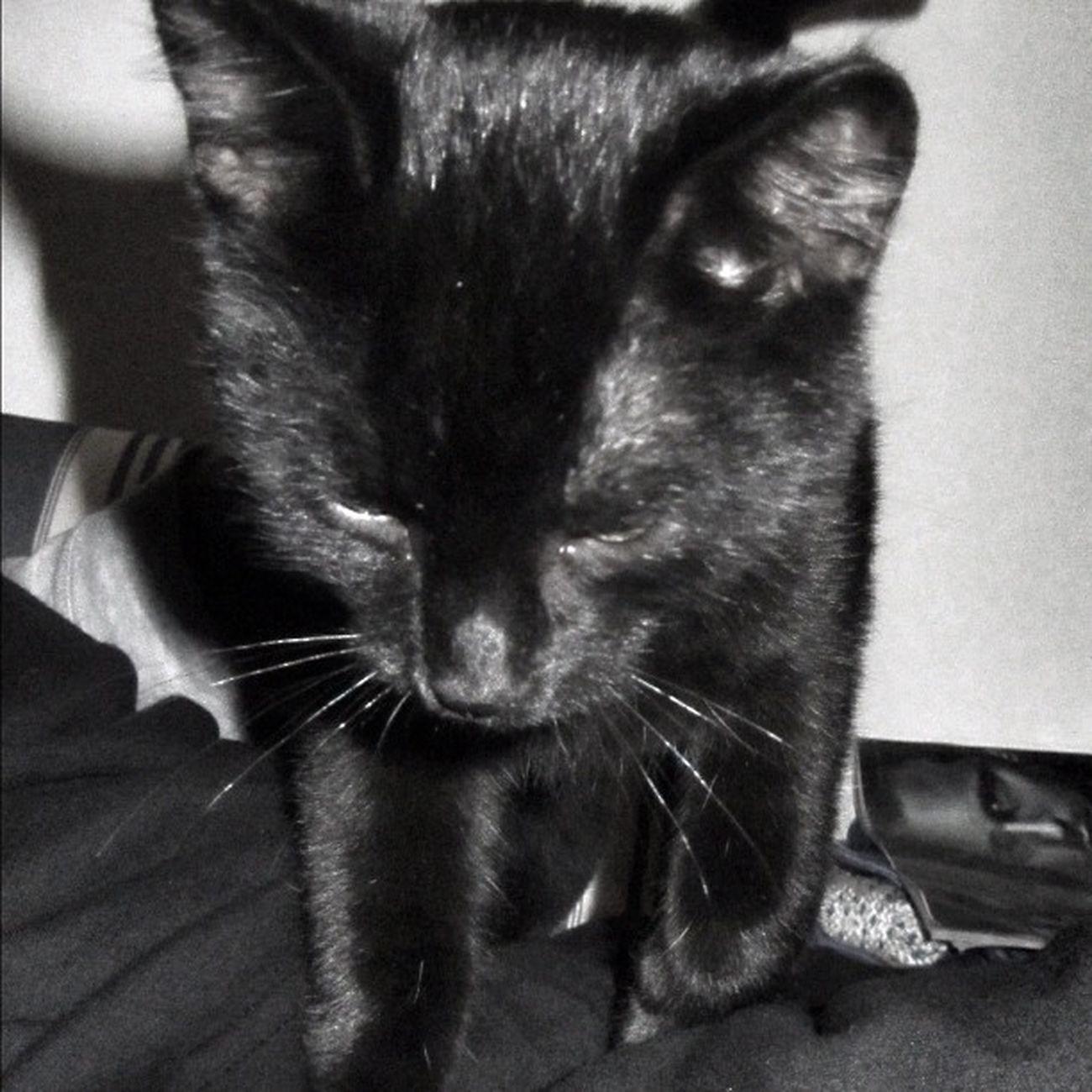 Blacky Cat Katze Sklfamily