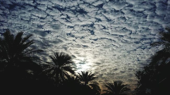 Spring Feelings الشروق صباح_الخير Sky And Clouds Sky First Eyeem Photo النخيل Springtime Sun Palm Trees