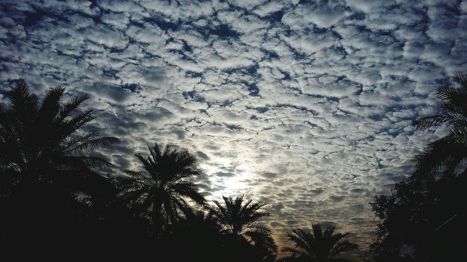 Spring Feelings الشروق صباح_الخير Sky And Clouds Sky First Eyeem Photo النخيل Springtime Sun Palm Trees