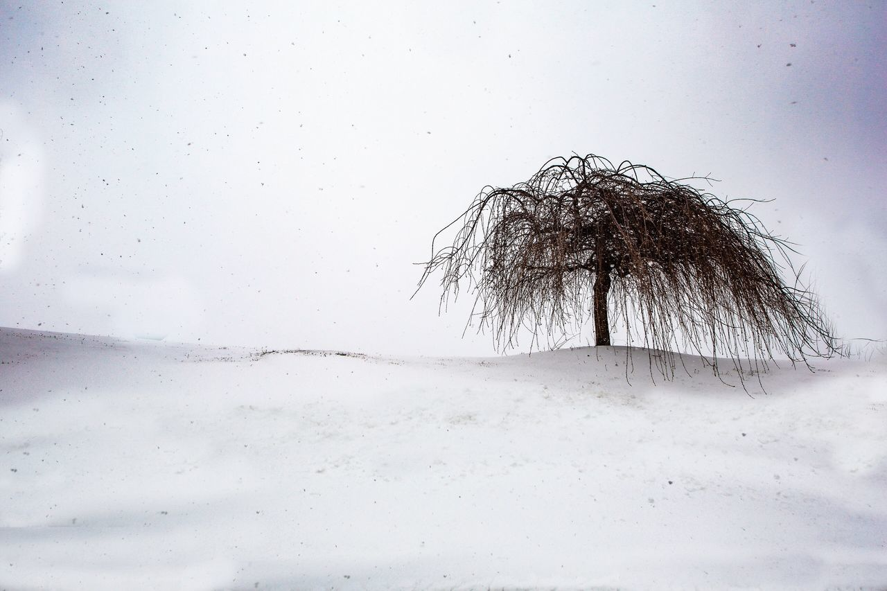 Winter Cold Temperature Snow Nature Tree No People Bare Tree Day Outdoors Sky Close-up Beauty In Nature Lone Tranquil Scene Beauty In Nature JGLowe Nature Tree