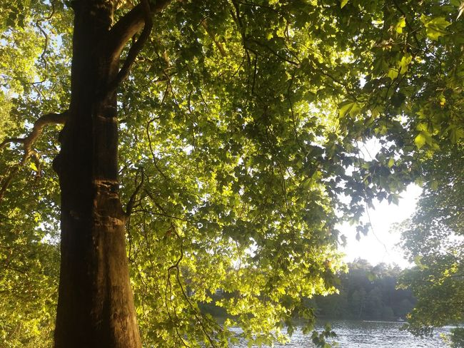 A summer day at Schlachtensee Beauty In Nature Branch Countryside Day Green Green Color Growth Lake Lush Foliage Nature No People Non-urban Scene Outdoors Remote Scenics Sky Solitude Sunbeam Sunny Tranquil Scene Tranquility Tree Tree Trunk Water WoodLand