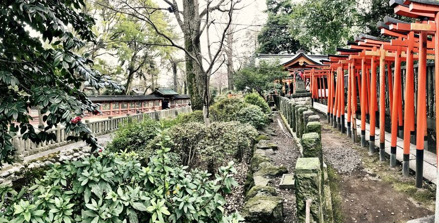 Tree Building Exterior Architecture Built Structure Plant Growth Green Color Day Outdoors The Way Forward No People Nature Sky Panoramic Photography Shotoniphone7 Tranquility IPhoneography Shrine Of Japan Japan Photography EyeEmJapan Shrines & Temples Place Of Worship Nezu Shrine Beauty In Nature Japanese Garden