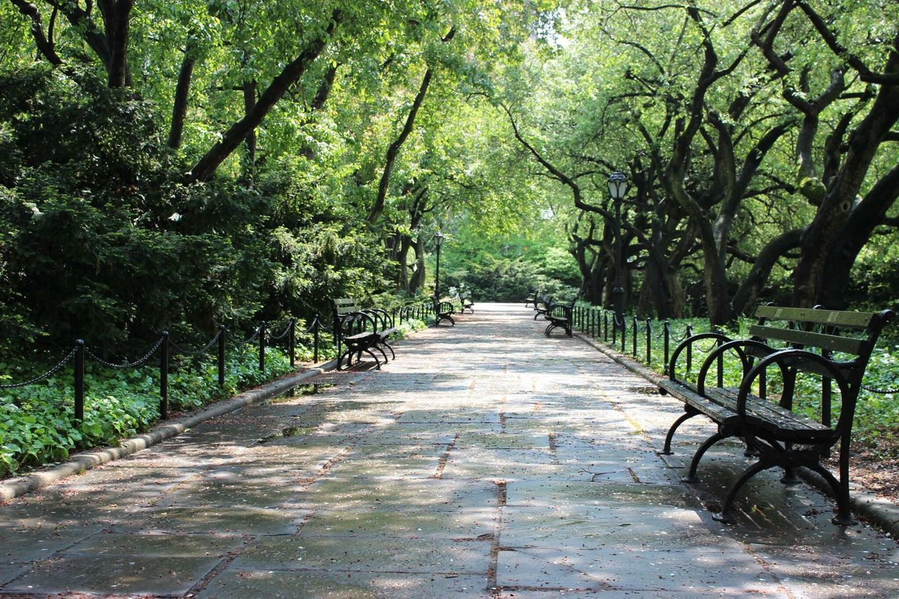 Silent Quiet Alone Benches Central Park New York Park Photographer Photography Canon600D Taking Photos Greenery Nofilter