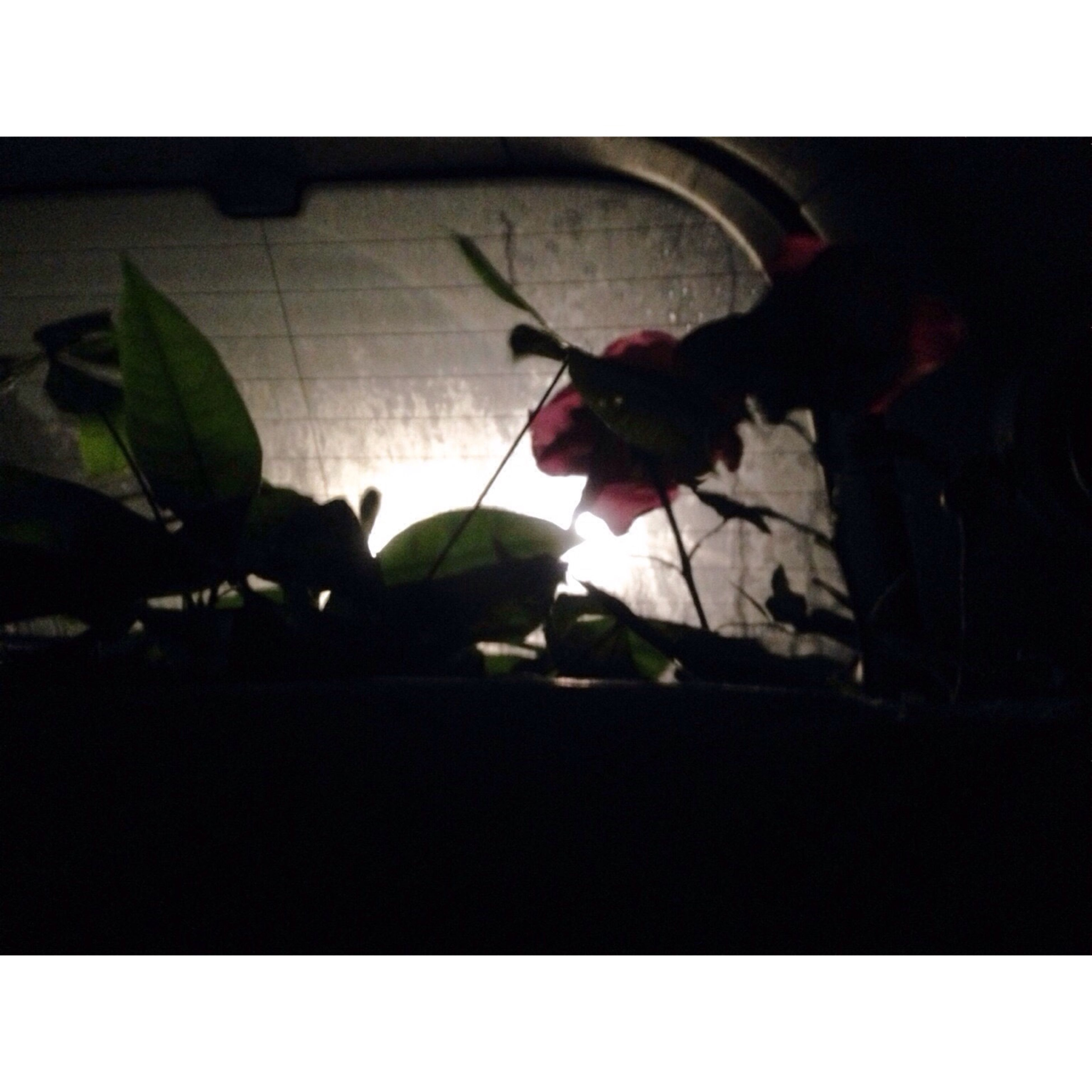 transfer print, auto post production filter, flower, plant, indoors, leaf, growth, sunlight, potted plant, shadow, wall - building feature, close-up, window, day, nature, frame, fragility, copy space