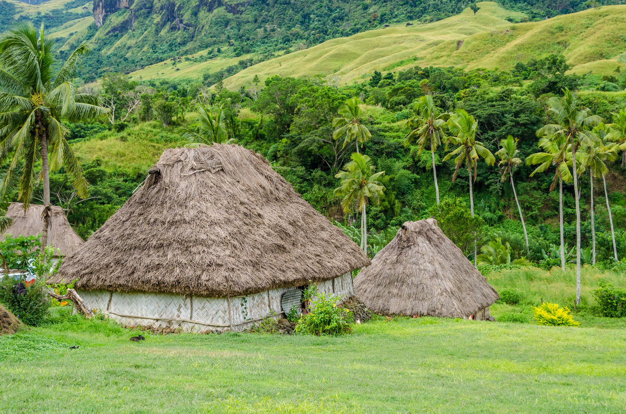 Navala village Agriculture Bure Day Fiji Grass Hut Huts Landscape Mountain Nature Navala Navala Village No People Outdoors Palm Tree Rural Scene Thatched Roof Traditional Village