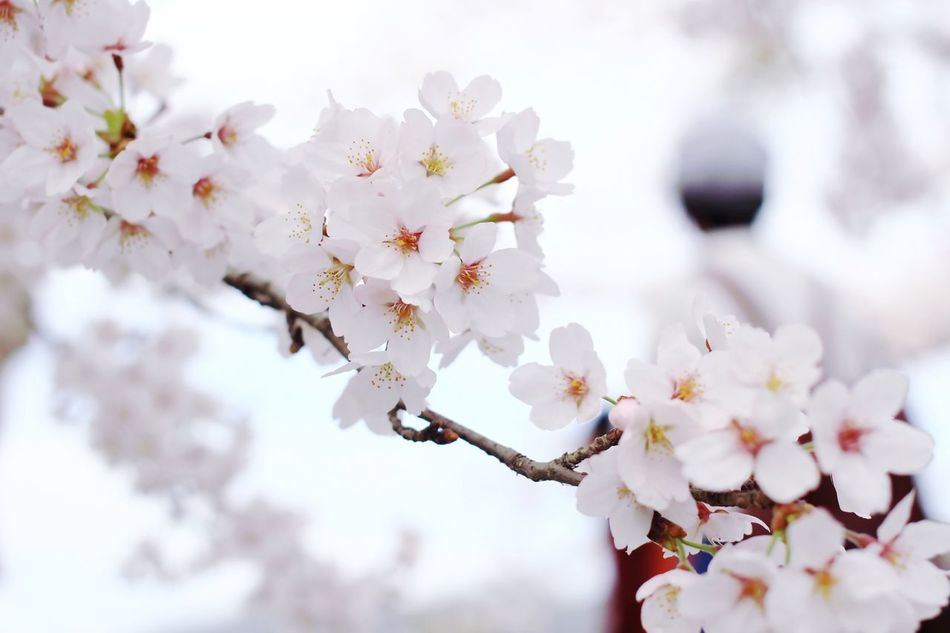 Beautiful stock photos of heaven, Beauty In Nature, Close-Up, Day, Flower