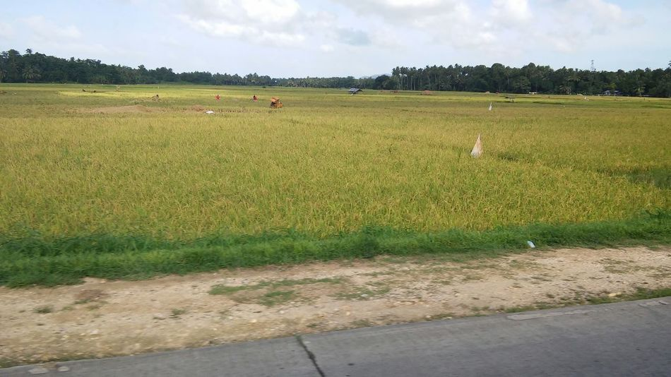 Nofilter Along The Road Green Green Green!  Trees Ricefield Lovetheview Thumbs Up 😜😜✌✌✌