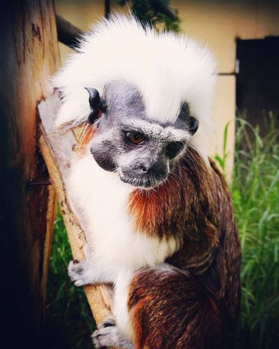 One Animal Monkey Primacy Nature Mammal Pets Domestic Animals Animal Themes