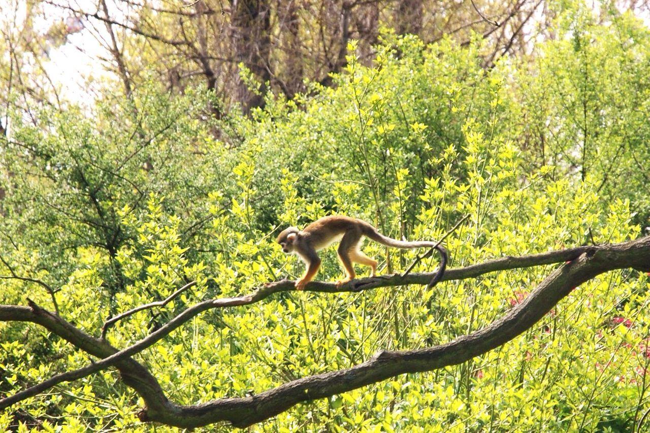 Monkey Check This Out zoo Prague Czech republic