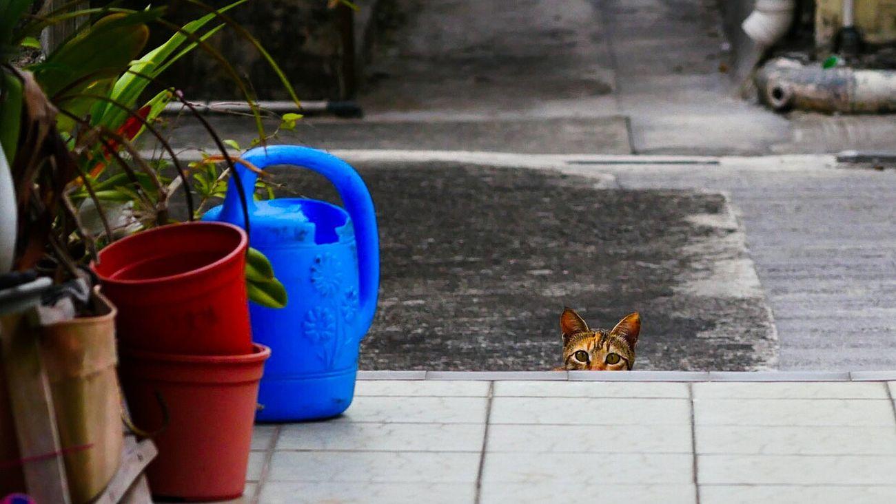 Animal Themes Cat Outdoors Pets One Animal Photography Hongkong Photos Hongkonger Muiwo Lantau Hongkongstreet Spycat Cat Streetphotography Street