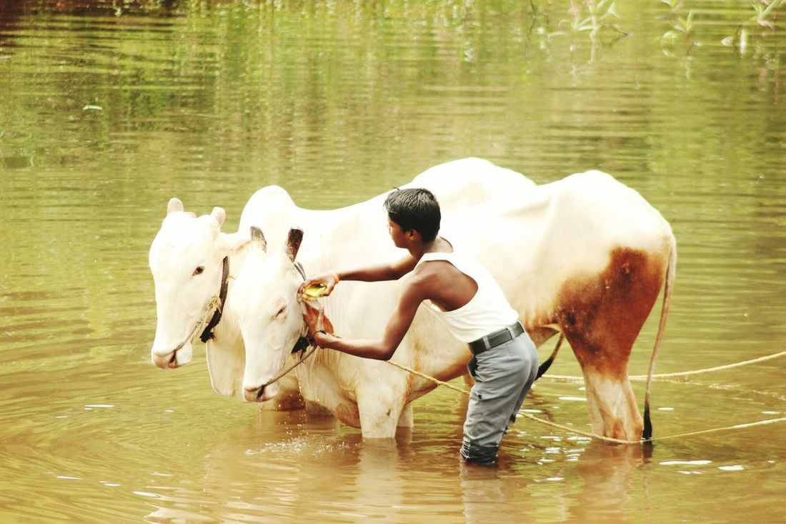 EyeEm Diversity Animal Washing Agriculture Farmer Animal Themes Water Friendship Kalyan Break The Mold EyeEmNewHere