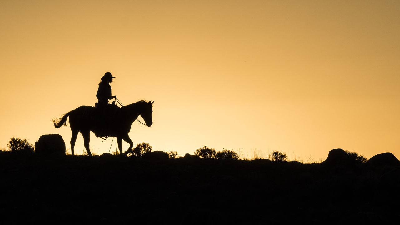 Beautiful stock photos of cowboy, American Culture, Animal Riding, Animal Themes, Copy Space